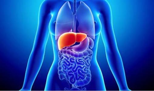 Reconheça os estágios da ingestão de Álcool no seu corpo e proteja sua Saúde.